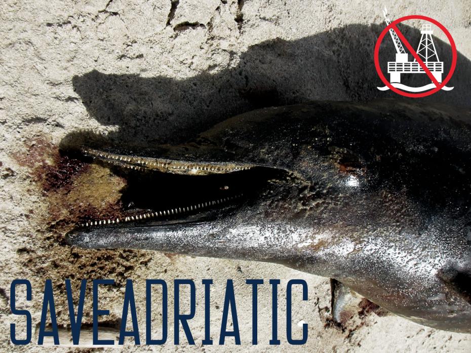 SA_dolphin_carcass