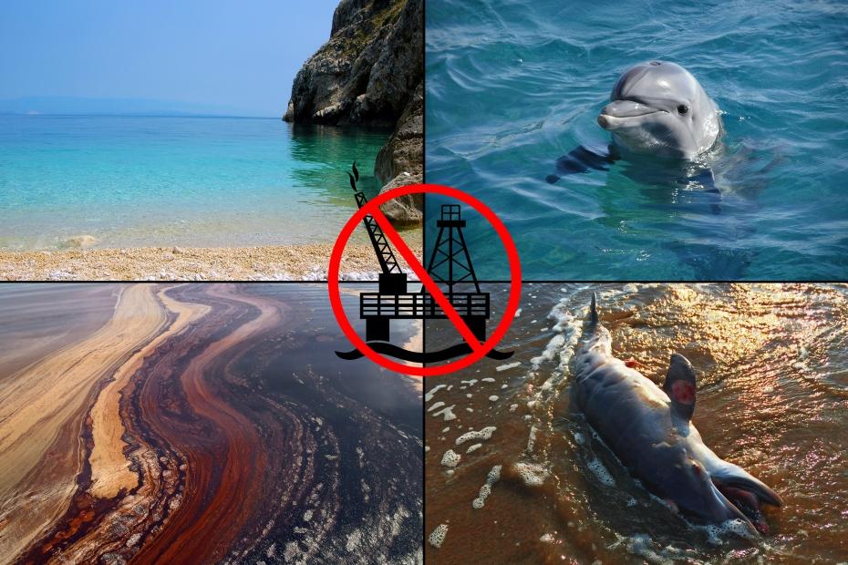 SA_Dolphin death