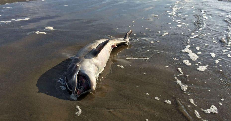 635677974700299501-Gulf-Oil-Spill-Dead-D-Duve